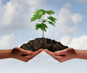 33242303 - cooperation growth business symbol as two hands holding up a heap of earth with a tree sapling growng.