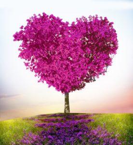 Arbre rose en forme de coeur